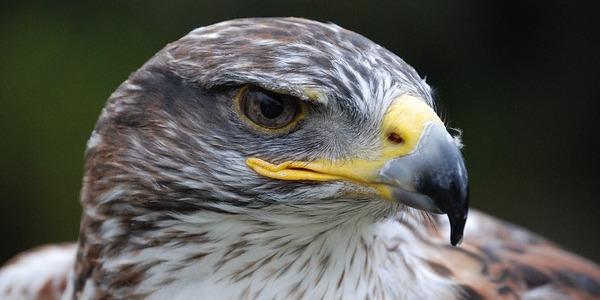 Знаете ли коя е най-силната птица на земята?